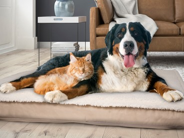 Comfy Pet Beds & Other Comfy Stuff